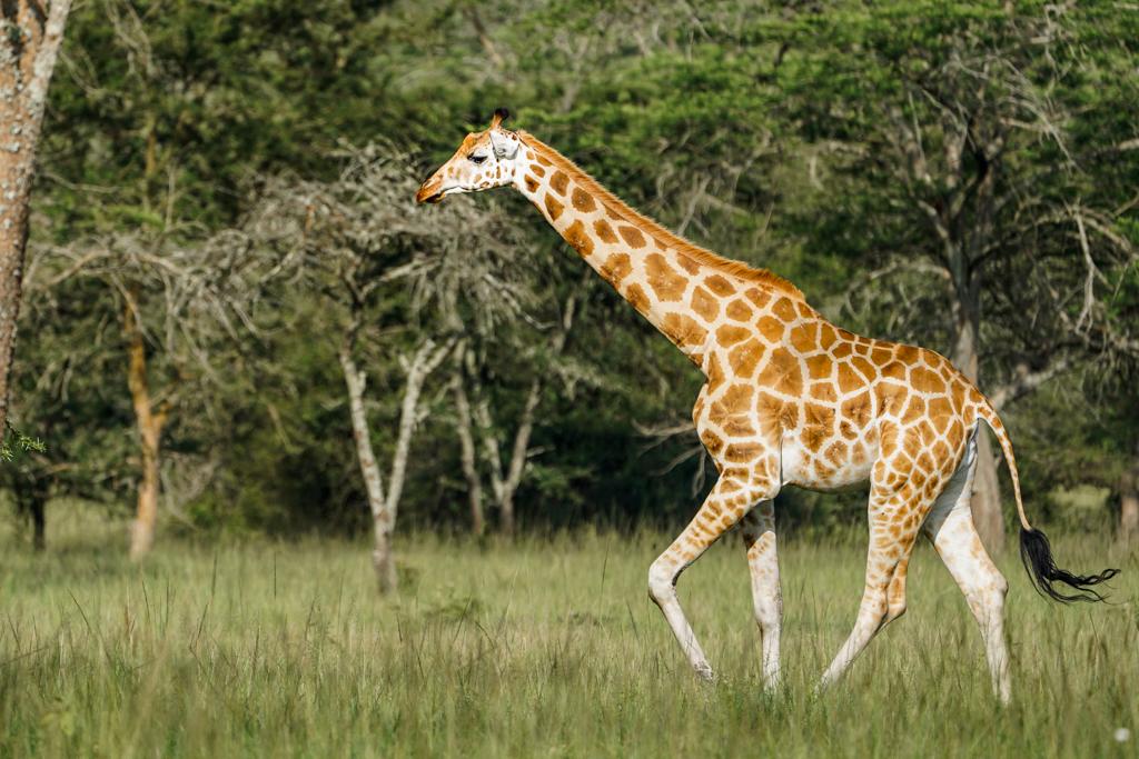 Highlights in Uganda: Gorillas, Löwen, Giraffen & Wasserprojekte 159