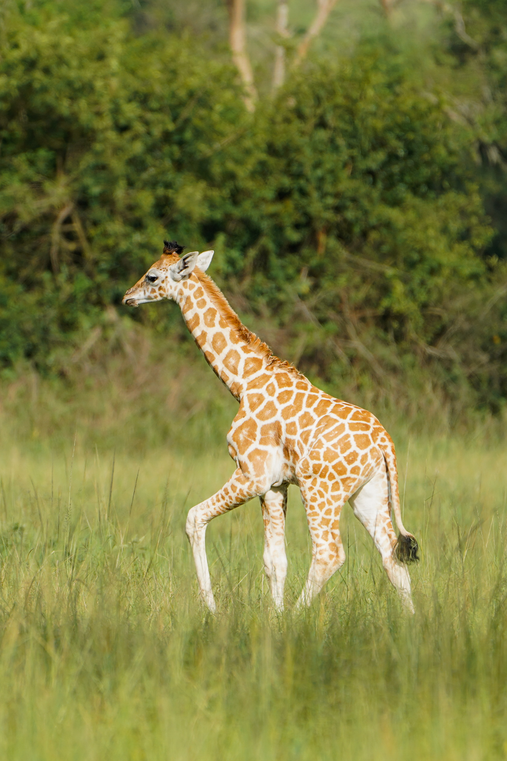 Highlights in Uganda: Gorillas, Löwen, Giraffen & Wasserprojekte 165