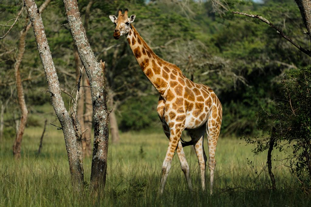 Highlights in Uganda: Gorillas, Löwen, Giraffen & Wasserprojekte 160