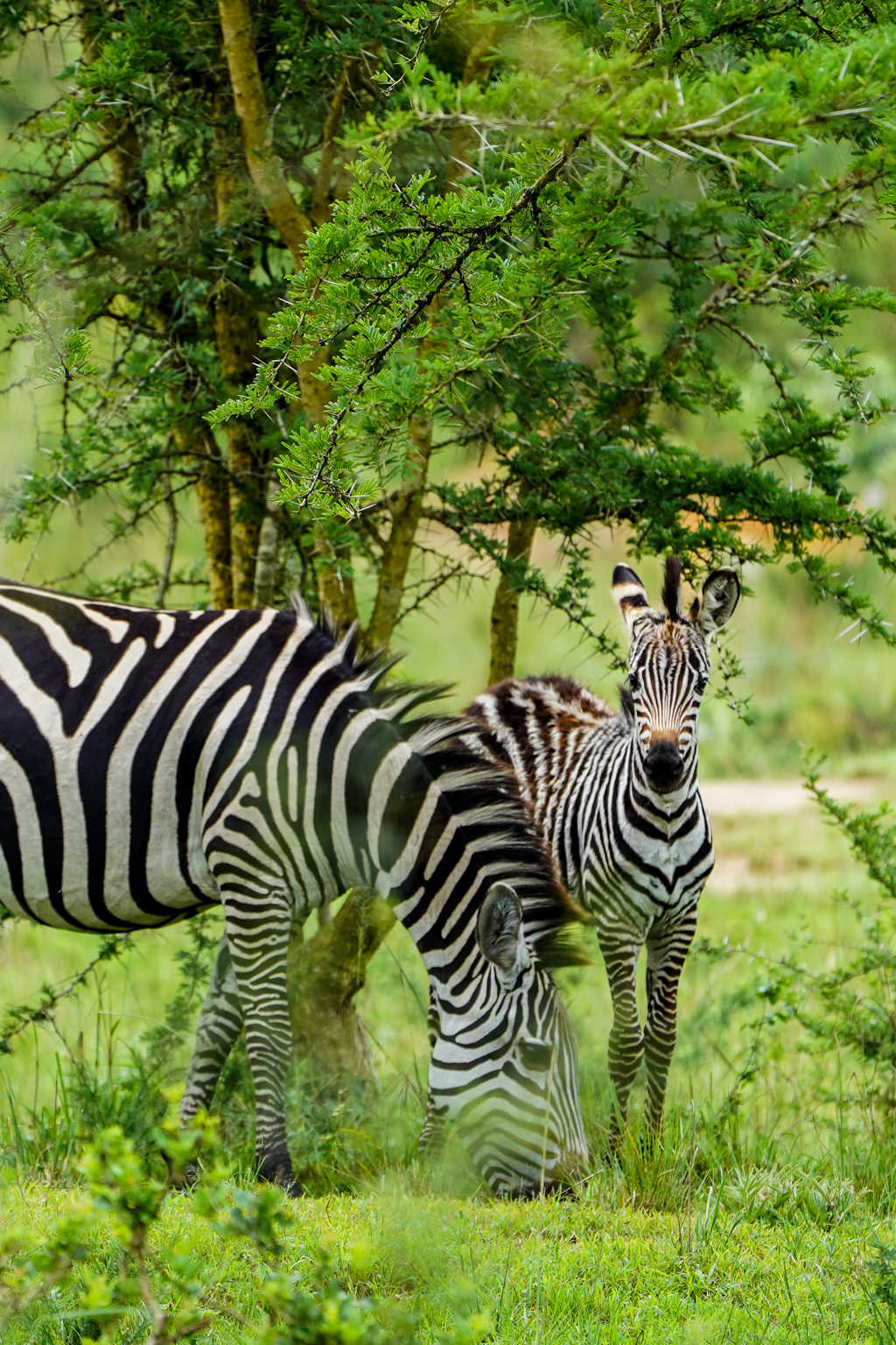 Highlights in Uganda: Gorillas, Löwen, Giraffen & Wasserprojekte 150