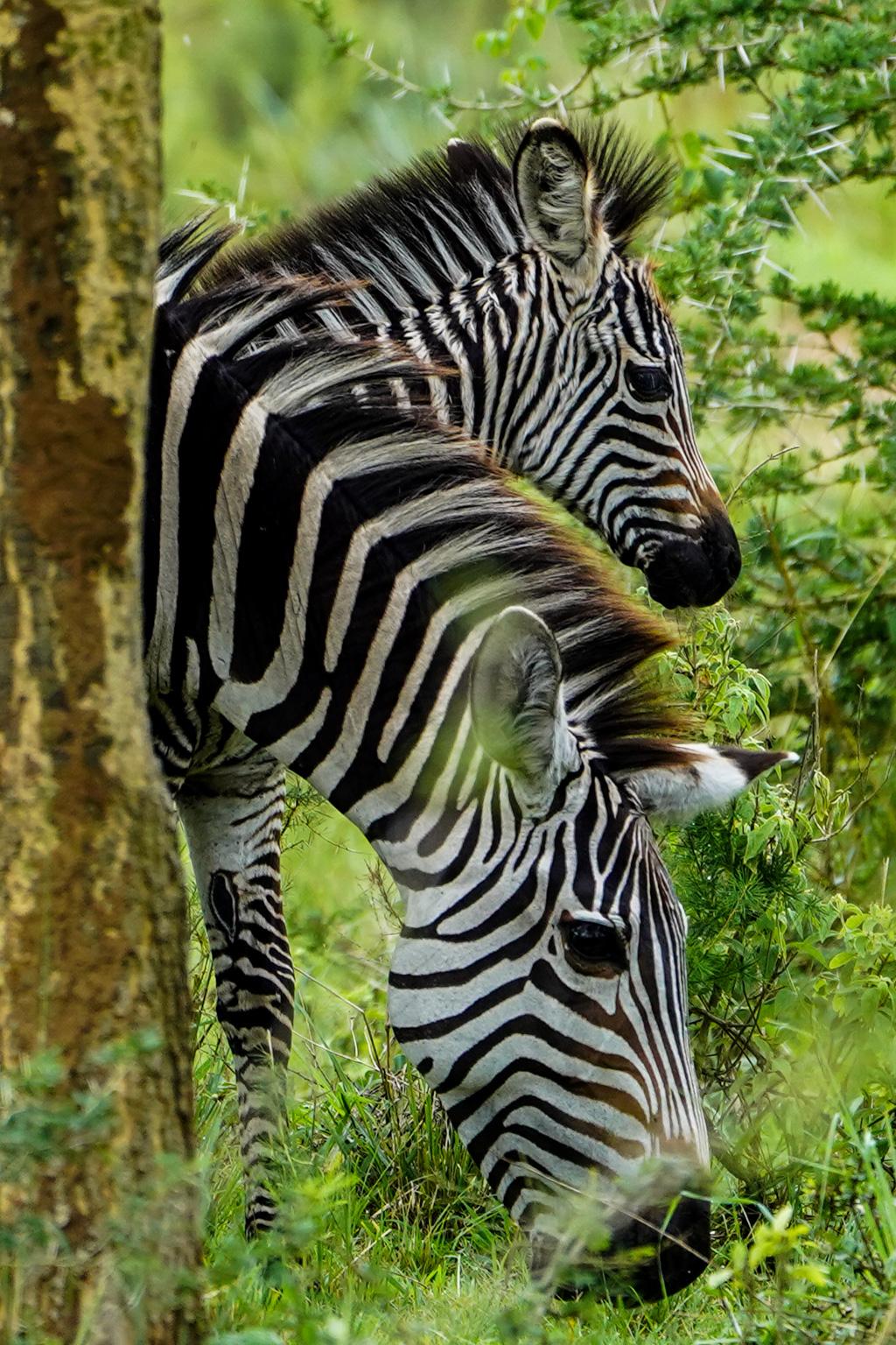 Highlights in Uganda: Gorillas, Löwen, Giraffen & Wasserprojekte 153