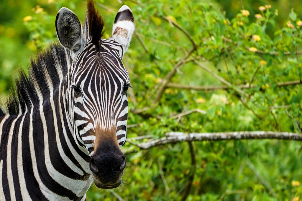 Highlights in Uganda: Gorillas, Löwen, Giraffen & Wasserprojekte 157
