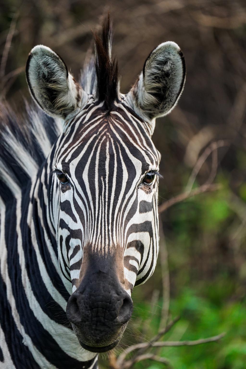 Highlights in Uganda: Gorillas, Löwen, Giraffen & Wasserprojekte 154