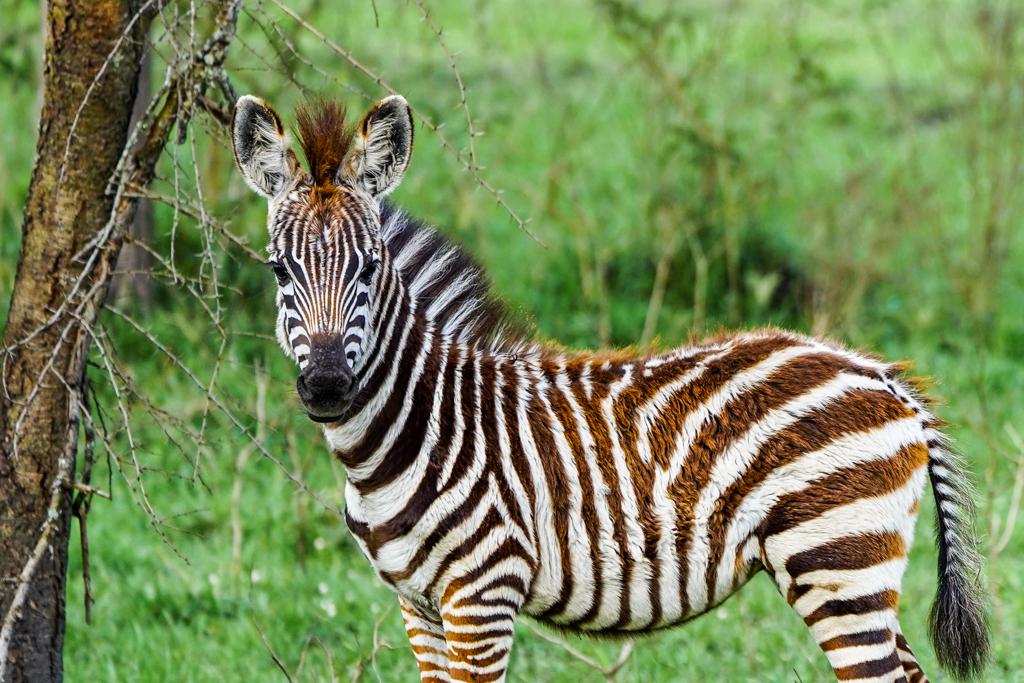 Highlights in Uganda: Gorillas, Löwen, Giraffen & Wasserprojekte 156