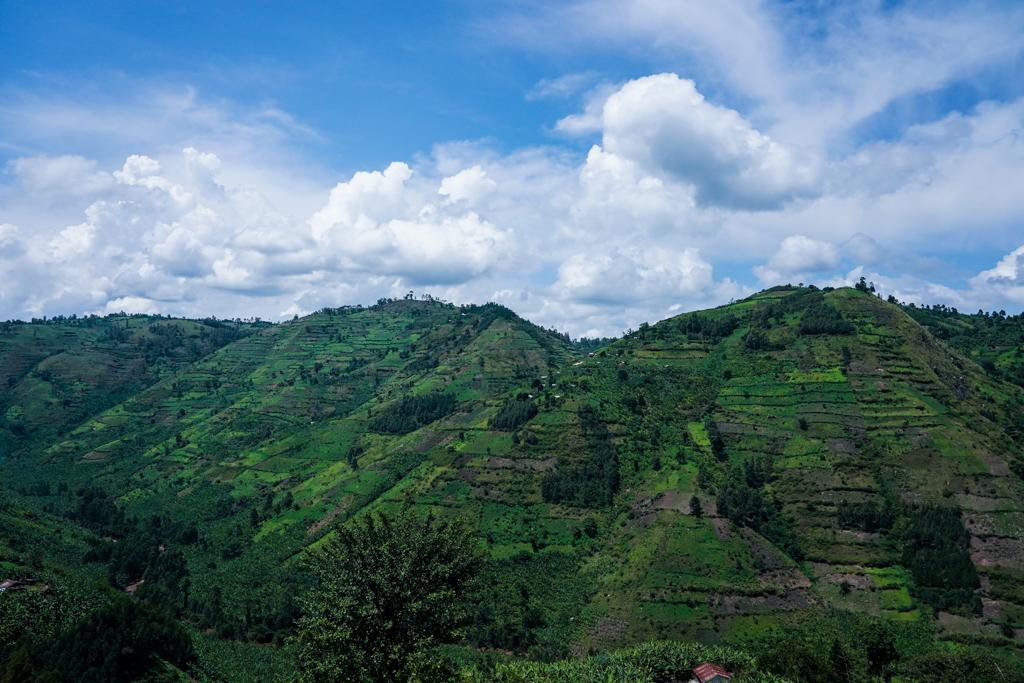 Bwindi Impenetrable Forest Nationalpark