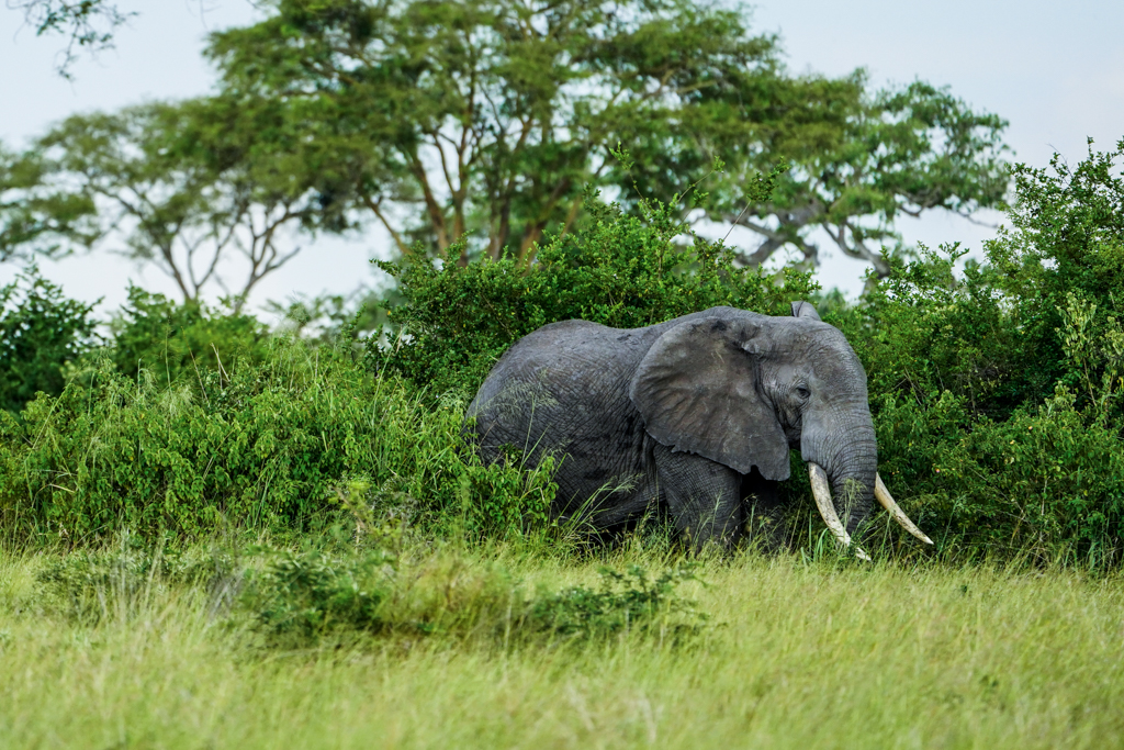 Highlights in Uganda: Gorillas, Löwen, Giraffen & Wasserprojekte 149