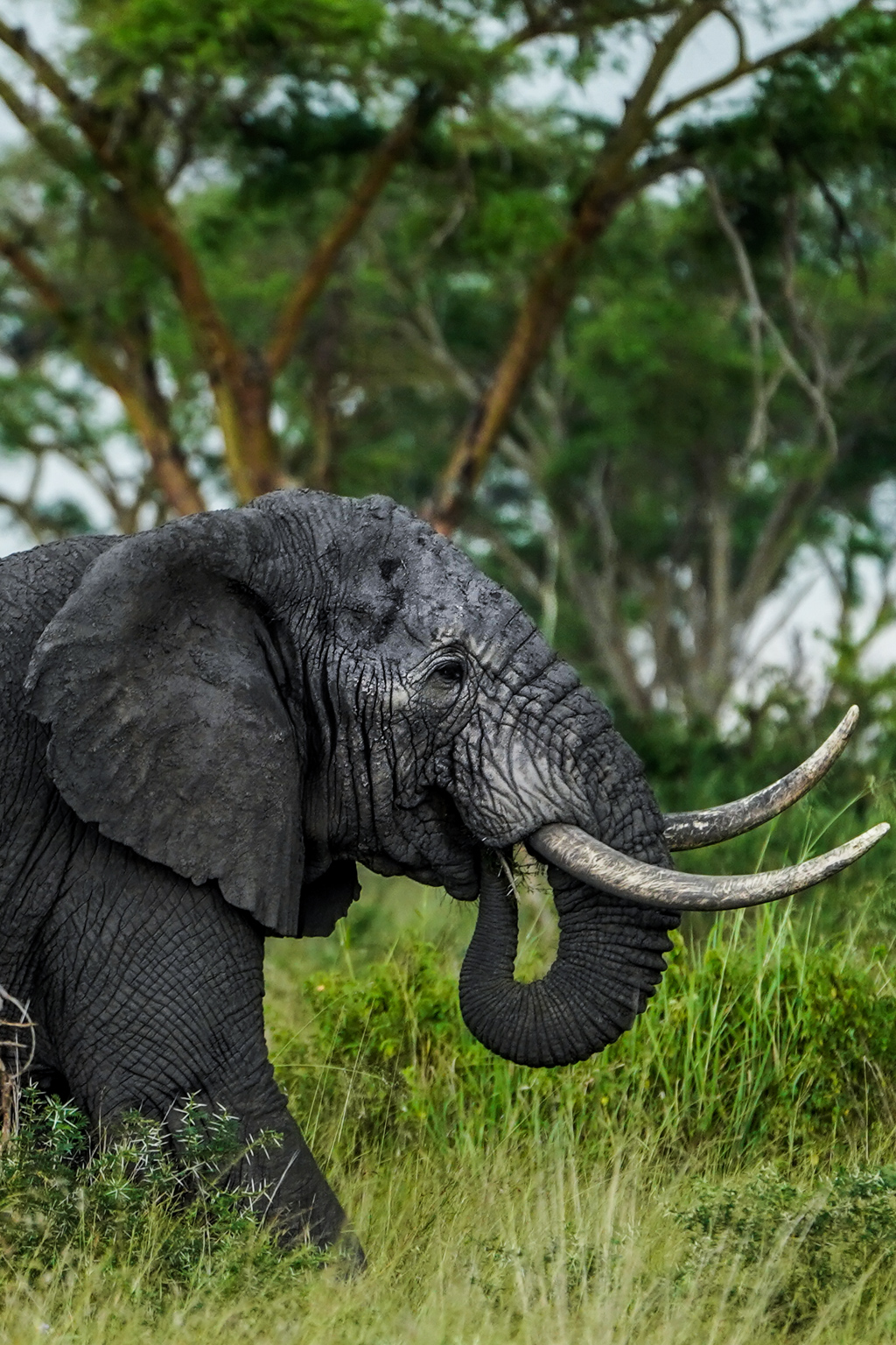 Highlights in Uganda: Gorillas, Löwen, Giraffen & Wasserprojekte 148