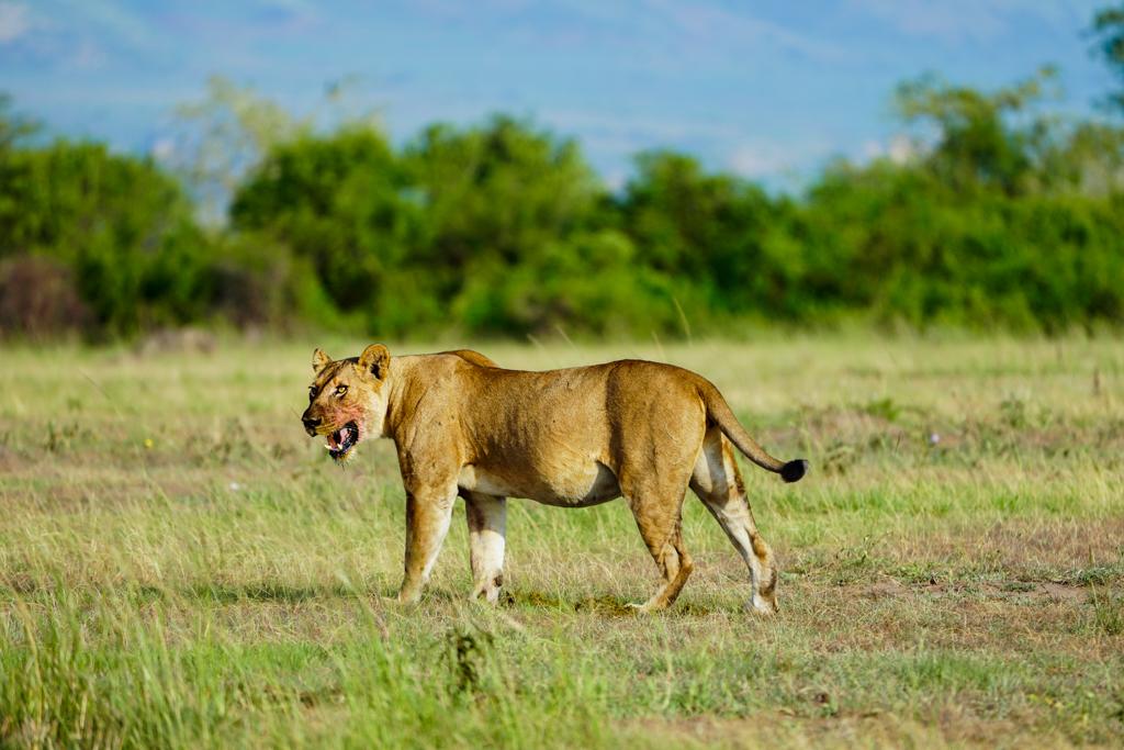 Highlights in Uganda: Gorillas, Löwen, Giraffen & Wasserprojekte 120