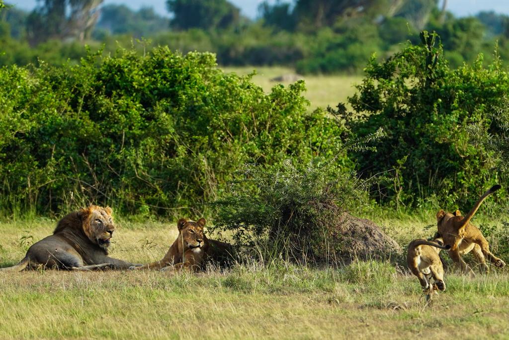 Highlights in Uganda: Gorillas, Löwen, Giraffen & Wasserprojekte 126