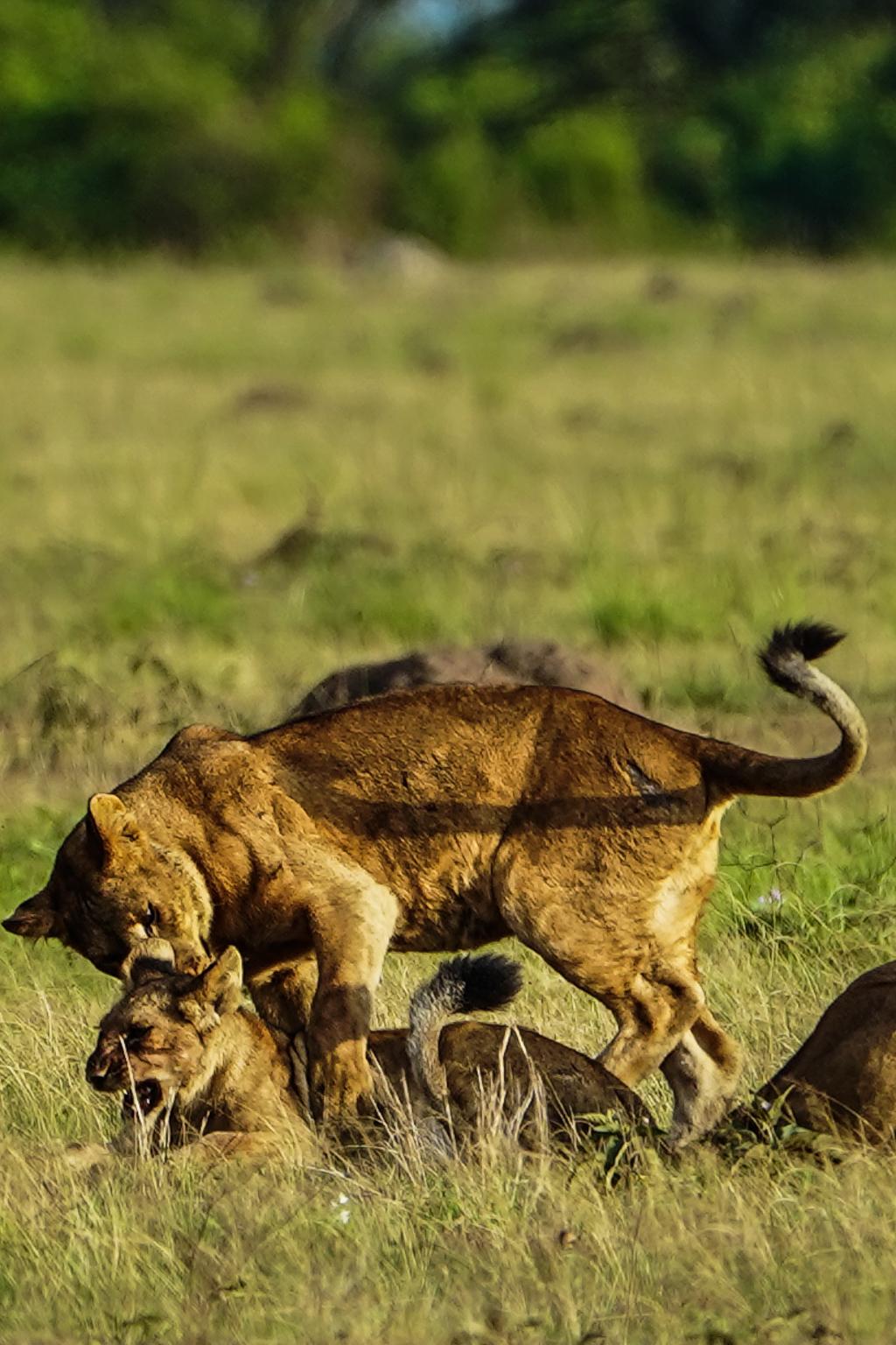 Highlights in Uganda: Gorillas, Löwen, Giraffen & Wasserprojekte 125