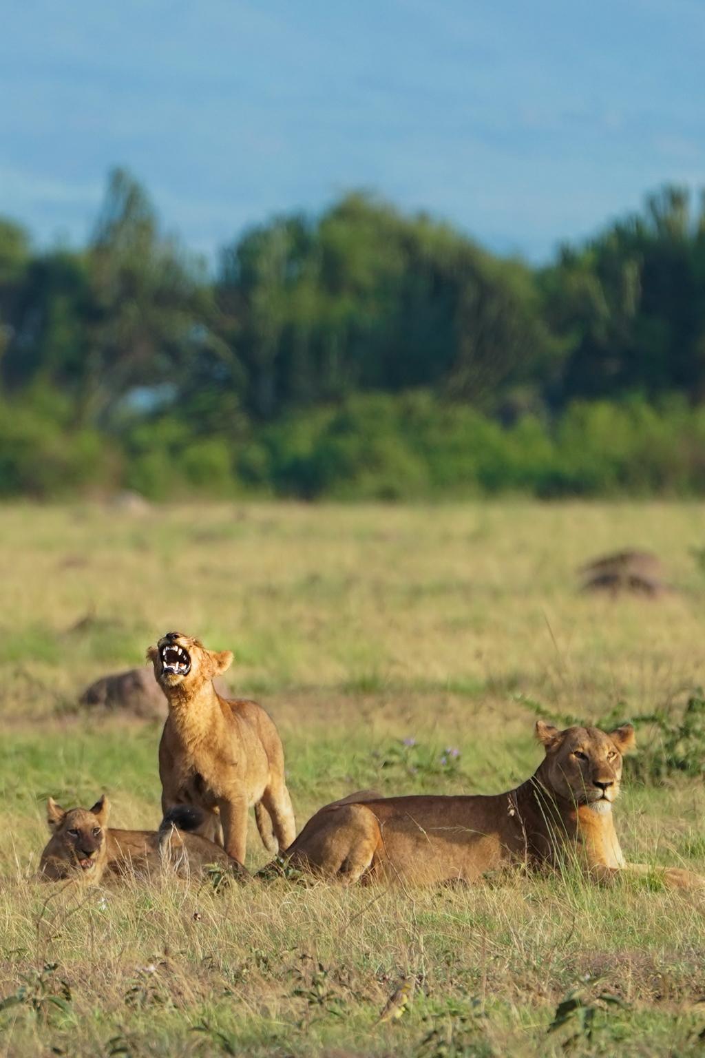 Highlights in Uganda: Gorillas, Löwen, Giraffen & Wasserprojekte 124