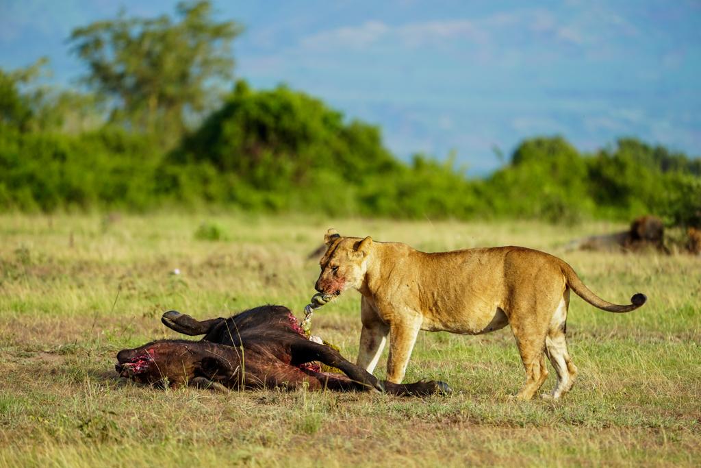 Highlights in Uganda: Gorillas, Löwen, Giraffen & Wasserprojekte 123