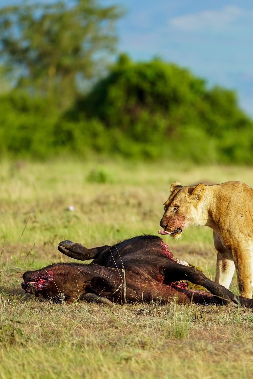 Highlights in Uganda: Gorillas, Löwen, Giraffen & Wasserprojekte 122