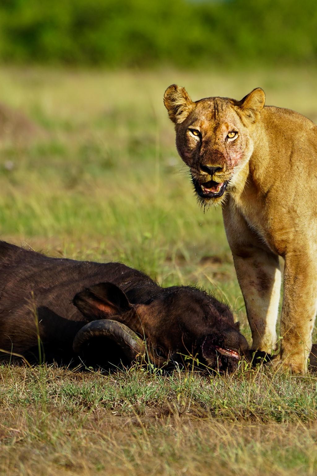 Highlights in Uganda: Gorillas, Löwen, Giraffen & Wasserprojekte 121