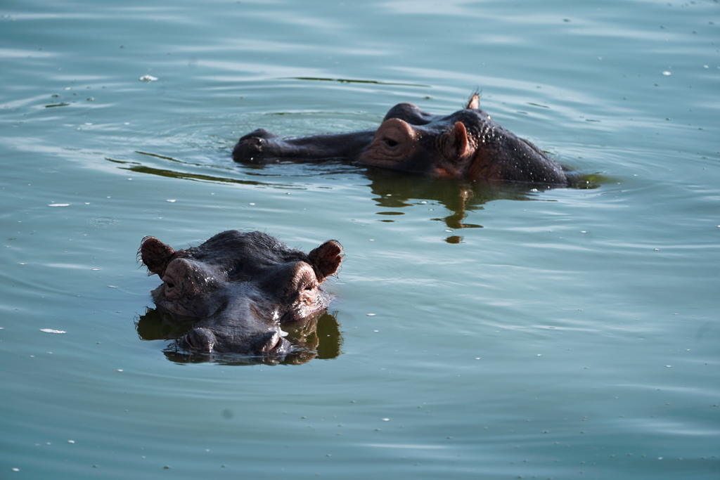 Highlights in Uganda: Gorillas, Löwen, Giraffen & Wasserprojekte 108