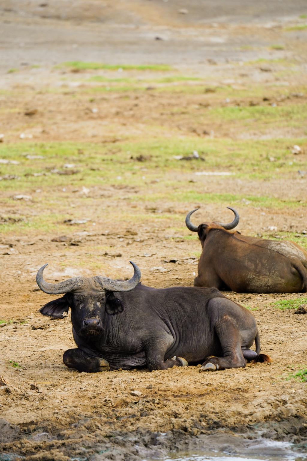 Highlights in Uganda: Gorillas, Löwen, Giraffen & Wasserprojekte 103