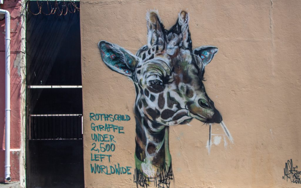 Street Art Woodstock Kapstadt