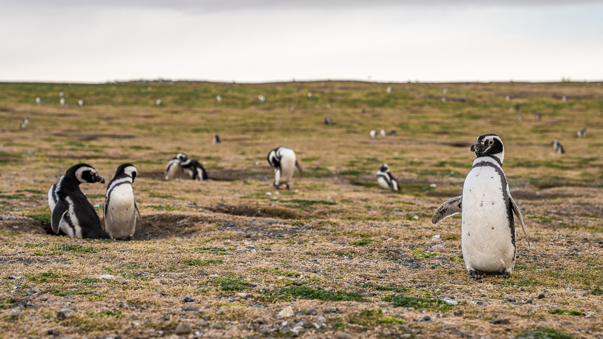 Erlebnis Kreuzfahrt durch die Fjorde in Patagonien 4