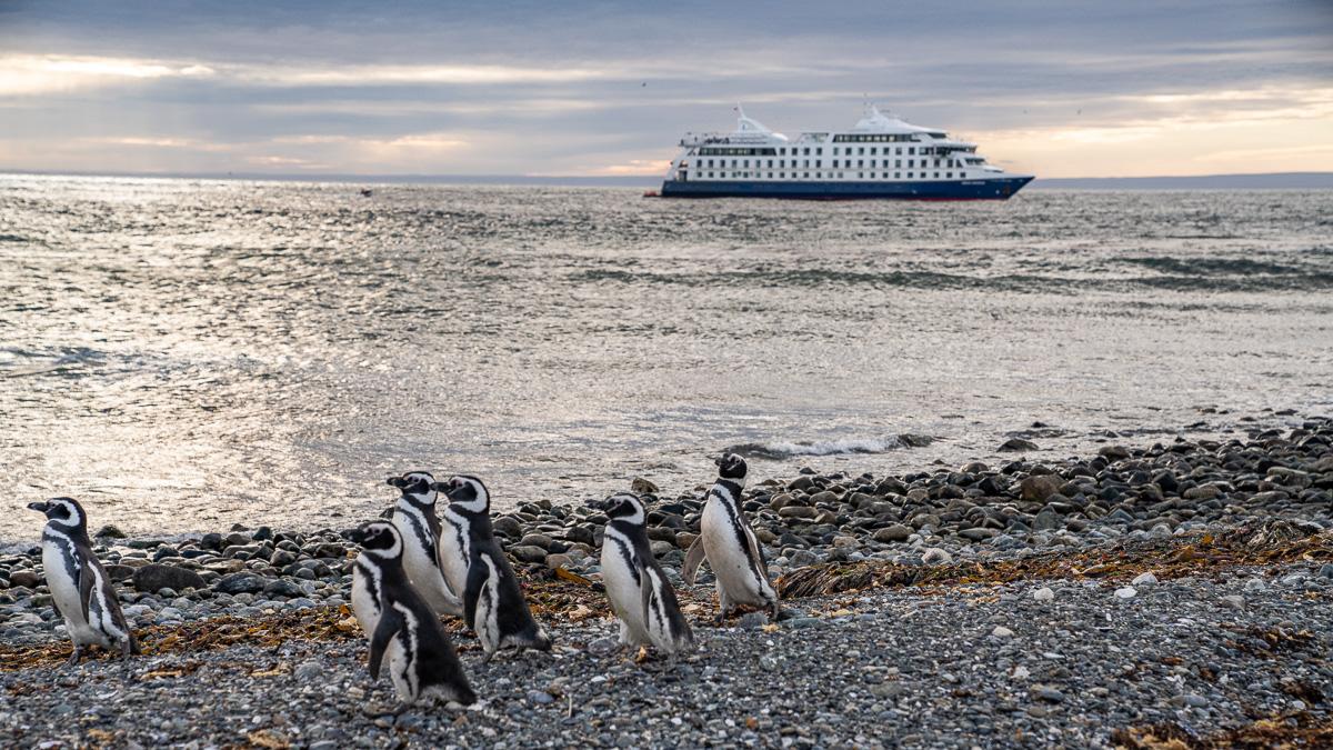 Pinguine Isla Magdalena Chile