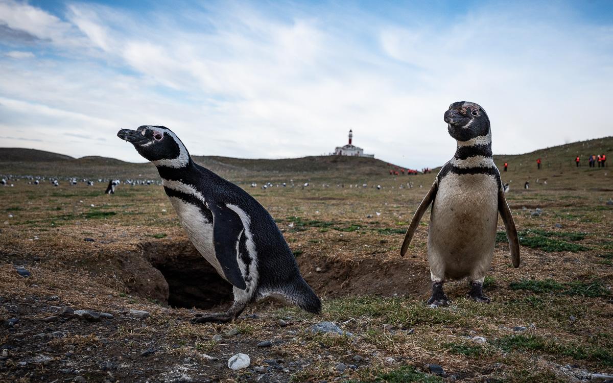 isla-magdalena-pinguine-patagonien