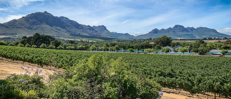 Winelands Südafrika: Die schönsten Weingüter rund um Stellenbosch