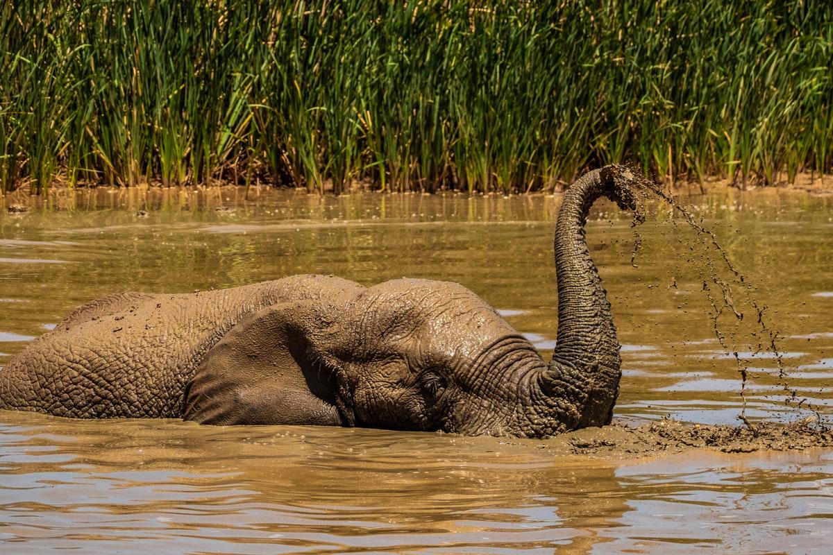 addo-elephant-park-elefanten-wasser