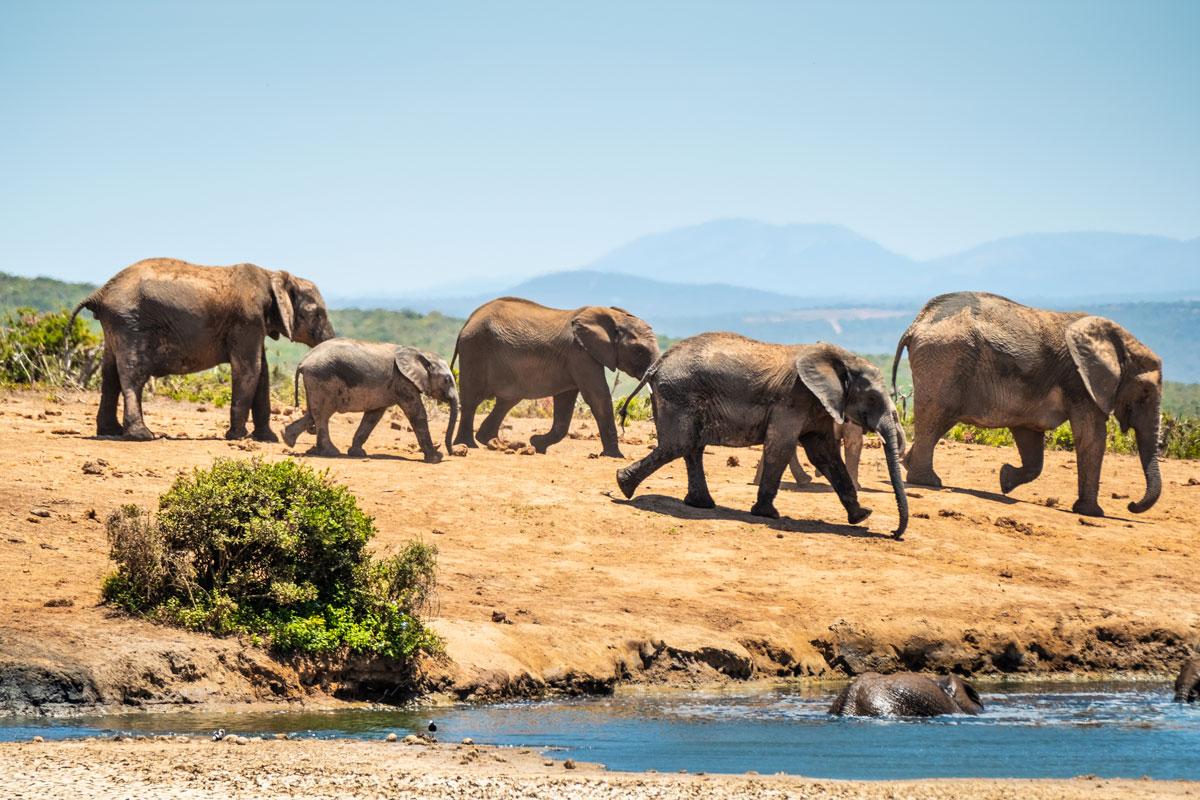 addo-elephant-park-elefanten