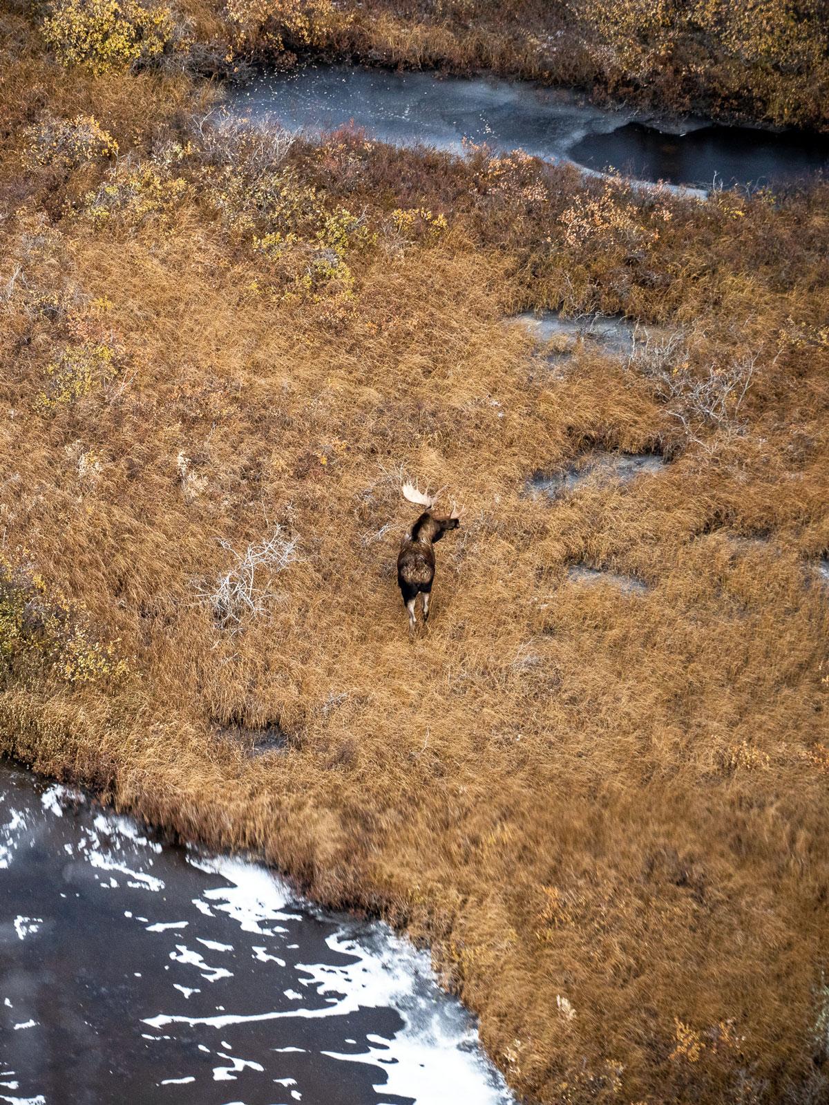Moose Churchill
