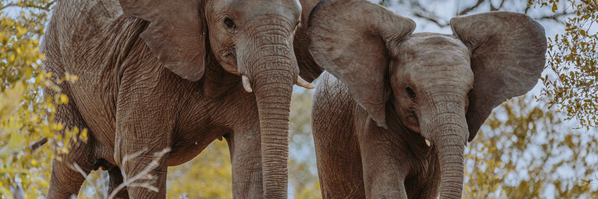 Tipps für den Krüger Nationalpark in Südafrika