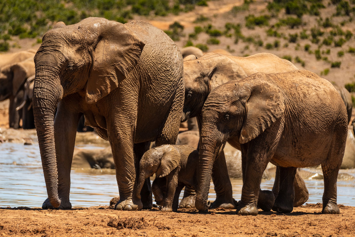 elefantenbaby-addo-elephant-park