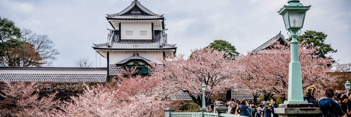 Japanische Kirschblüte Hanami- Vorhersage und beste Reisezeit