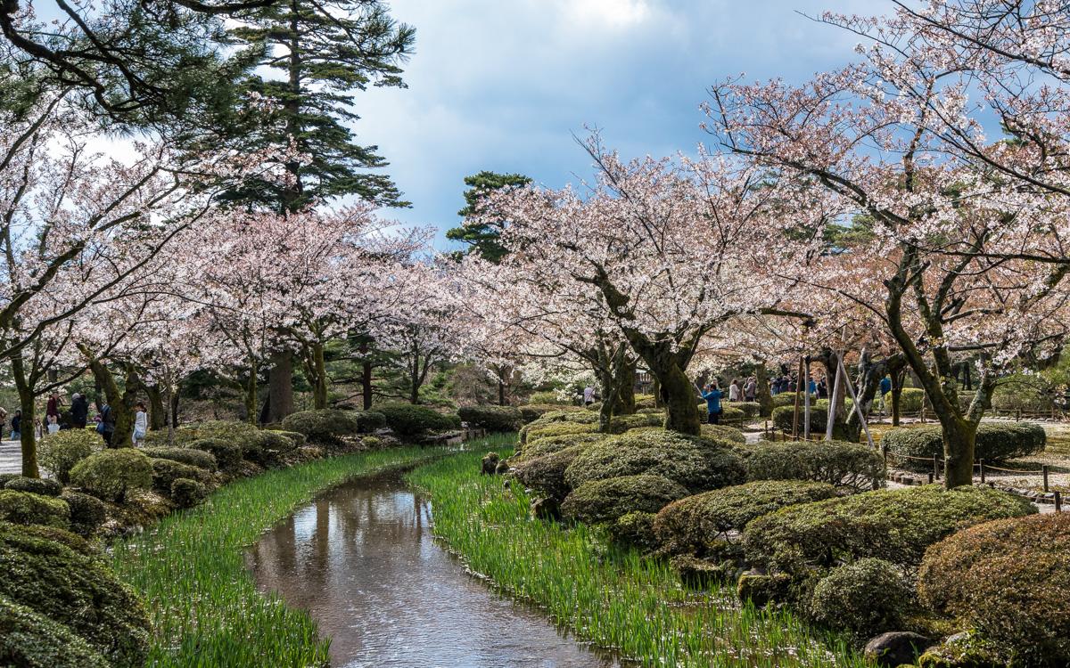 kirschbluete-japan-kanazawa-park3