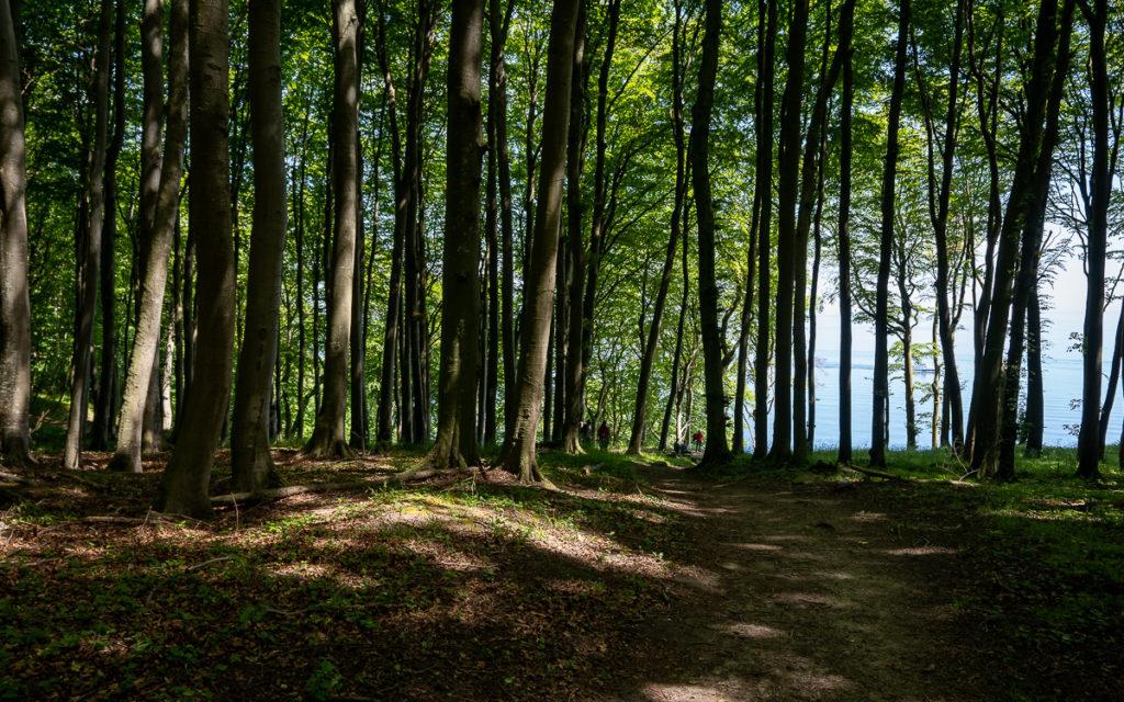 Rügen Urlaub: Die 11 schönsten Sehenswürdigkeiten neben Kreidefelsen & Königsstuhl 41