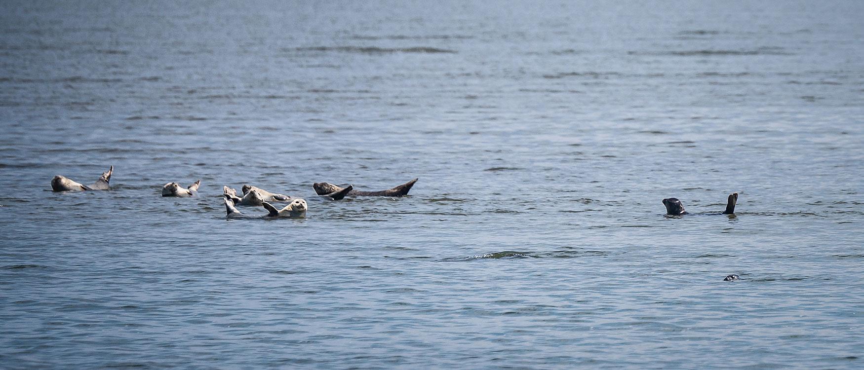 Seehundsbänke Sylt