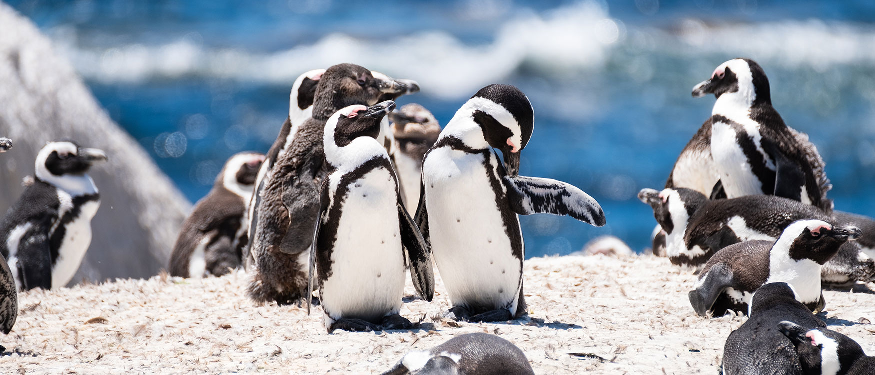 Kaphalbinsel Sehenswüridkgeiten Pinguine