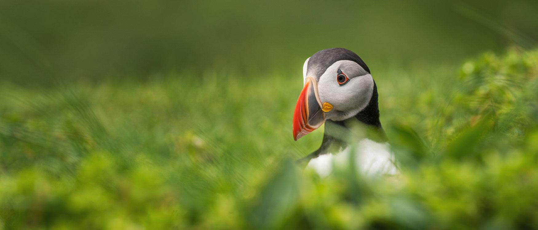Sehenswürdigkeiten Insel Mykenes Papageientaucher Färöer