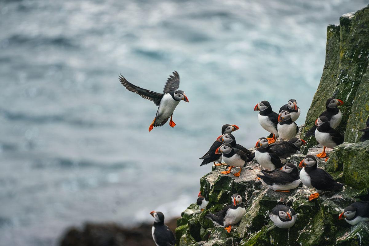 """Urlaub auf den Färöer Inseln: """"The Land of maybe"""" 31"""