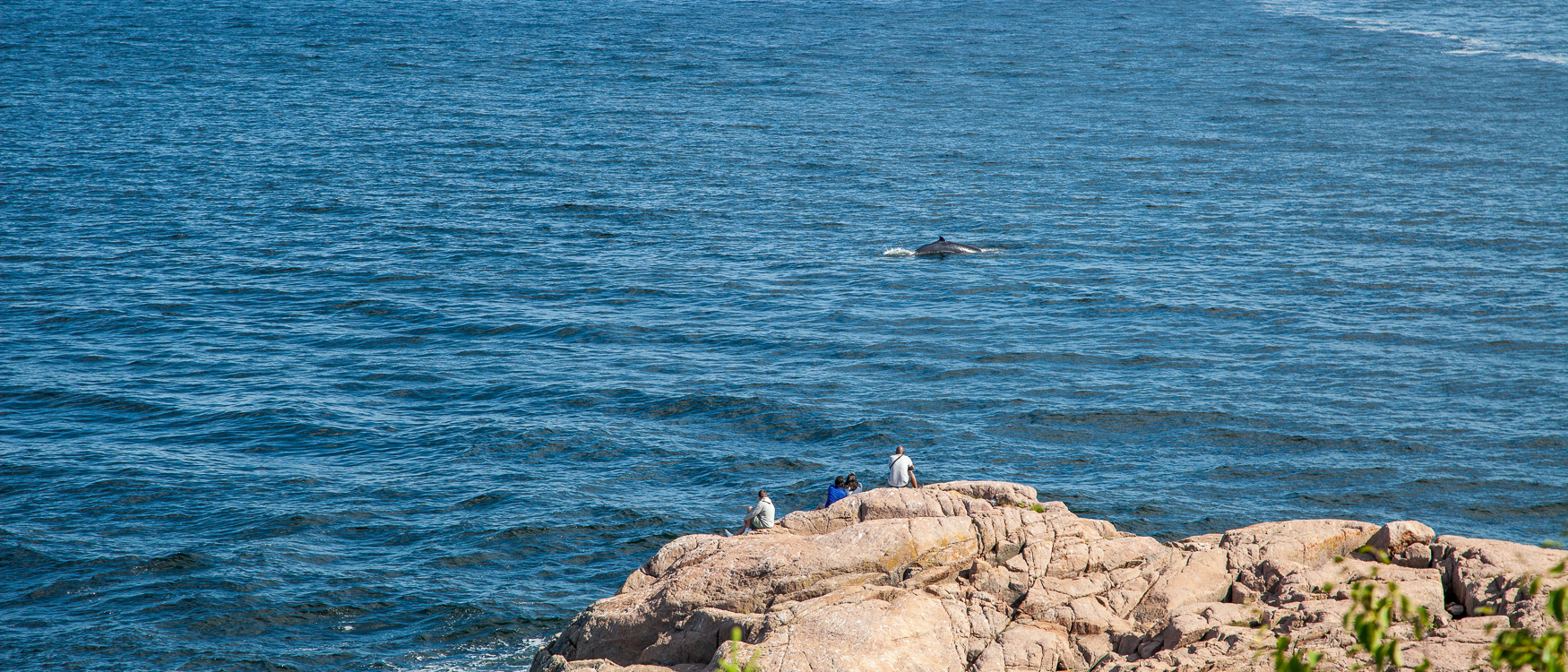 quebec-roadtrip-whale-watching