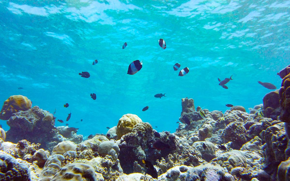 malediven-urlaub-schnorcheln 2