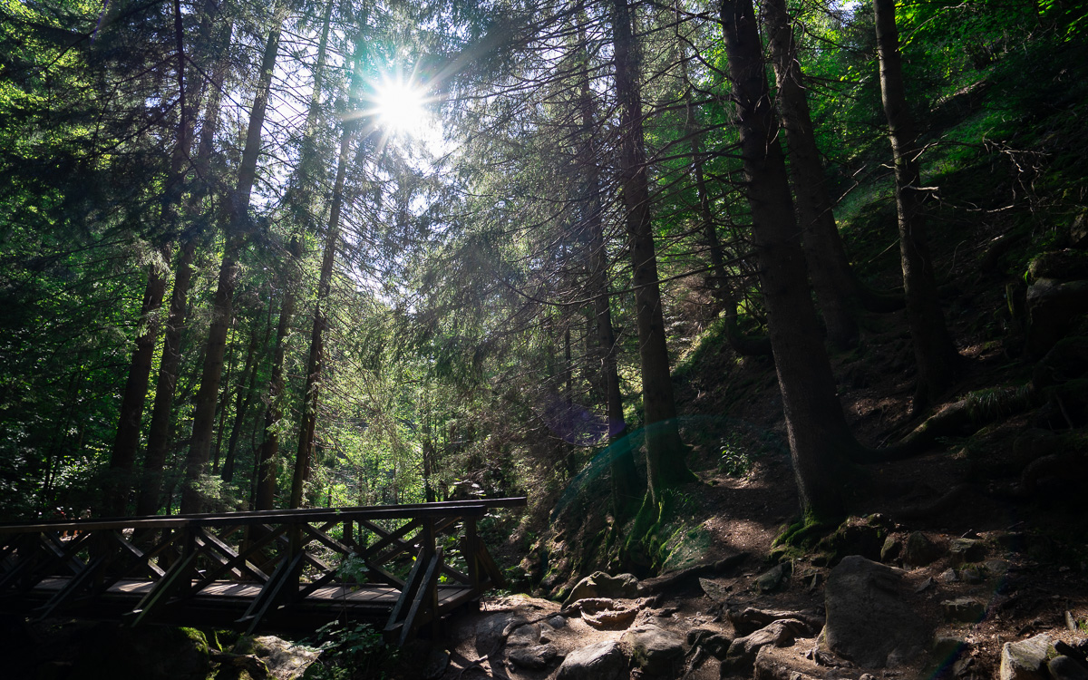 roadtrip-schwarzwald-ravennaschlucht-brücke