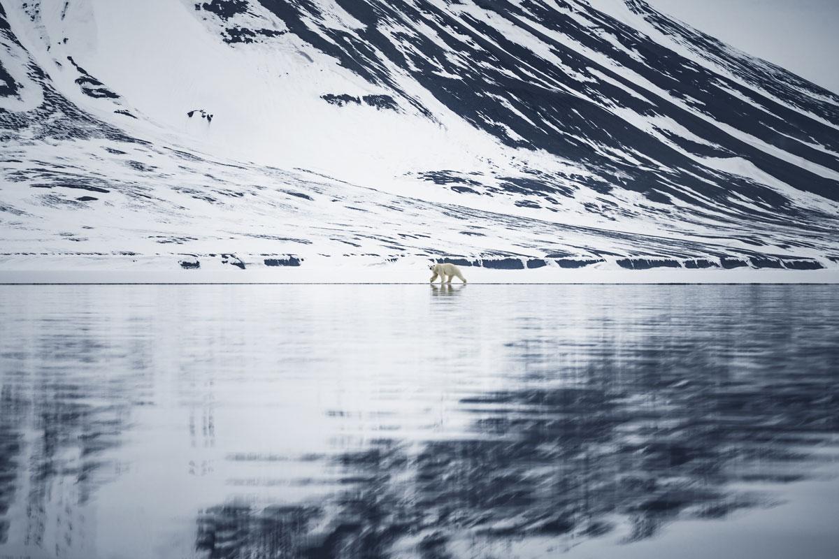 bellsund-spitzbergen-eisbaer