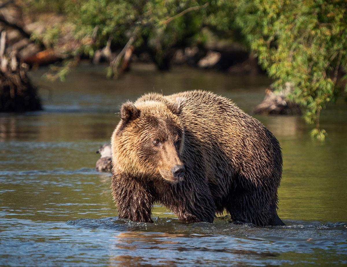 Kamtschatka Land der Bären