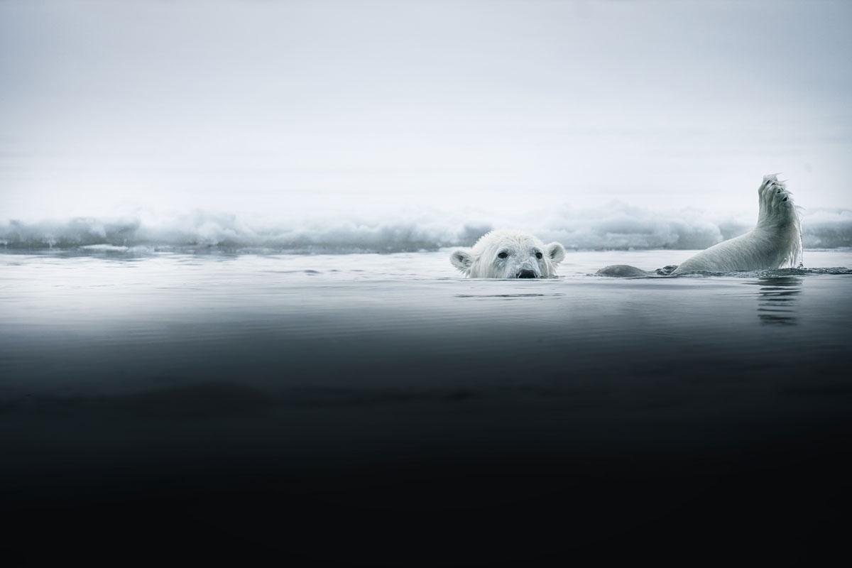 nordre-isfjorden-nationalpark-eisbaer