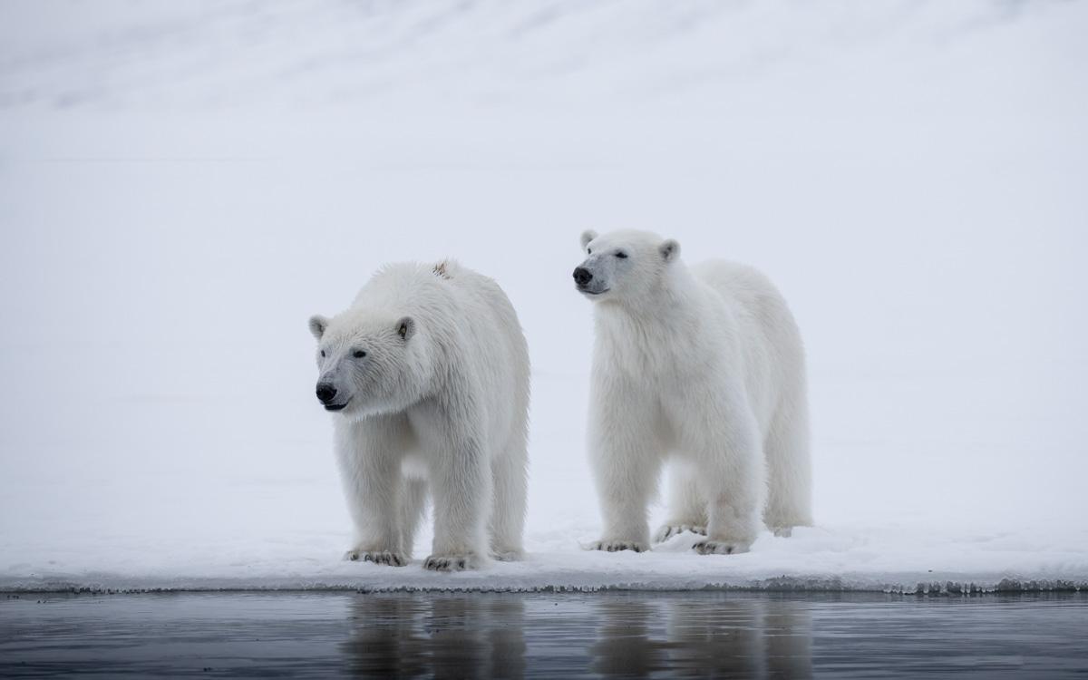spitzbergen-eisbaeren-2