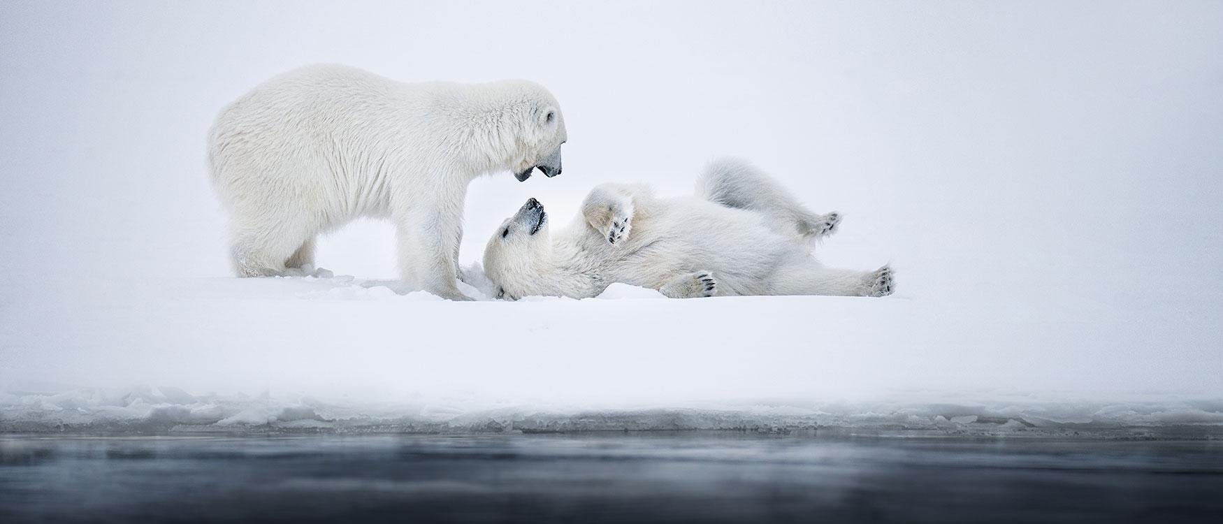 Expedition in die Arktis: Spitzbergen,  Eisbären und eine unfassbare Natur