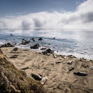 Seal Elephant Kolonie
