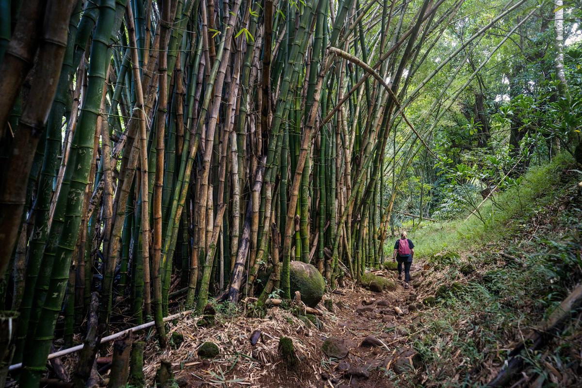 Bambuswald am Hanakāpī'ai Falls Trail