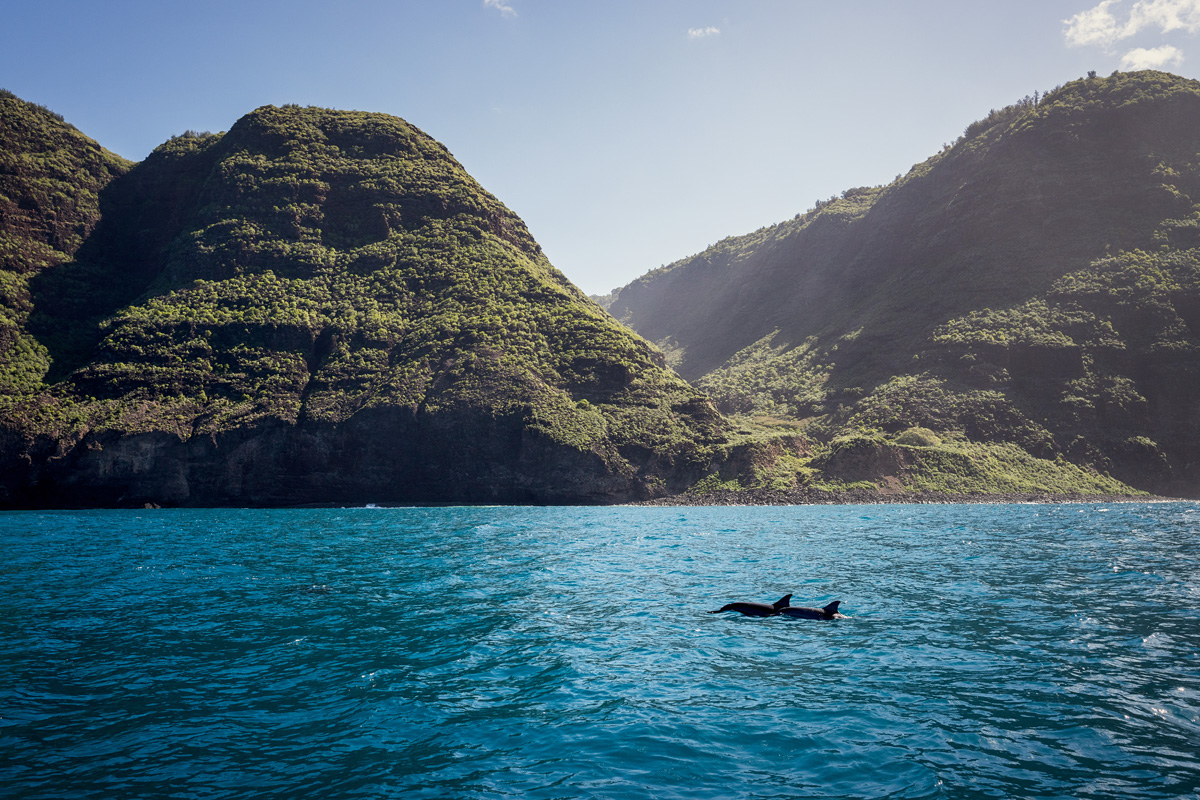 Spinner Dolphins Kauai Hawaii