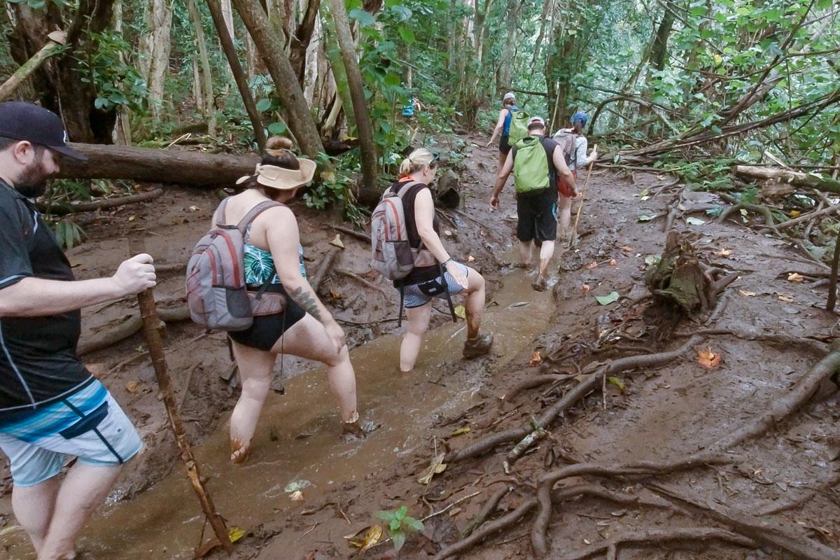 Matsch Kauai Hawaii