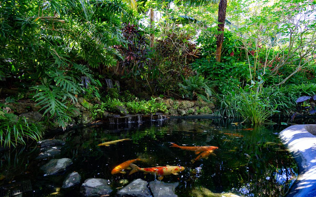 stpetersburg-florida-sehenswuerdigkeiten-sunken-gardens-koi
